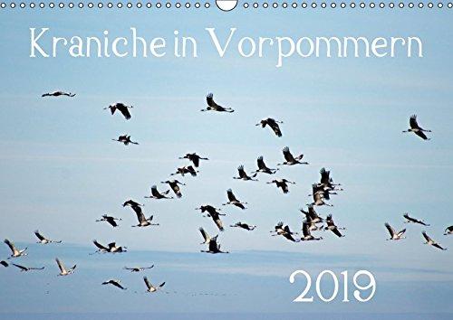 Kraniche in Vorpommern (Wandkalender 2019 DIN A3 quer)